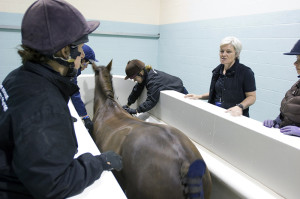 Dr Kathryn Nankervis, Principal Lecturer in equine therapy at Hartpury