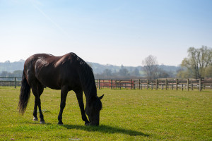 Smart Horse - Spring Grazing